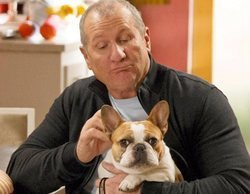 Muere Beatrice, la famosa perra Stella de 'Modern Family'
