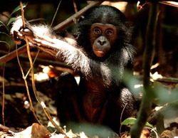 Nat Geo Wild estrena el 21 de enero 'Destination Wild', una espectacular serie documental sobre la vida salvaje