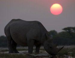 La 2 estrena este lunes la serie documental 'África'
