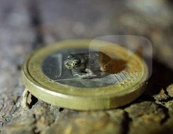 Frank Cuesta descubre la rana más pequeña del mundo