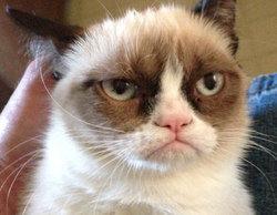 """La famosa """"Grumpy cat"""" tendrá su propia TV movie en Navidad"""