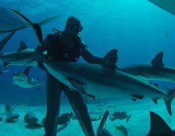 Discovery Channel dedica septiembre a los tiburones con el ciclo 'Sharktember'