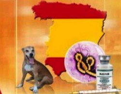 La televisión alemana informa del ébola en España con un mapa sin Catalunya