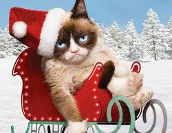 La gata Grumpy tendrá su propia película para televisión estas Navidades