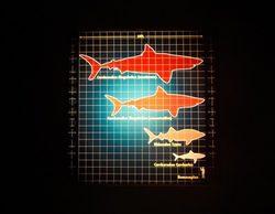 """La """"sharkmanía"""" vuelve a Discovery Max por Navidad"""