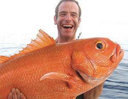 Discovery MAX buscará las especies más sorprendentes de la fauna marina en 'Pesca extrema con Robson Green'