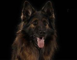 Four Luck Banana prepara 'Olfato de guardia', un docu-reality sobre las labores de las unidades caninas