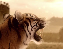 """Piden a Edurne que retire las escenas del videoclip de """"Amanecer"""" donde aparece la tigresa"""