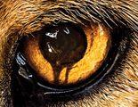 Mediaset se hace con los derechos de la polémica 'Zoo', nueva serie de ciencia ficción de CBS