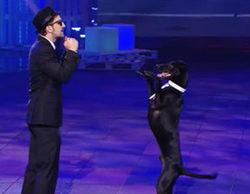 El perro Rocky, ganador de '¡Vaya fauna!'