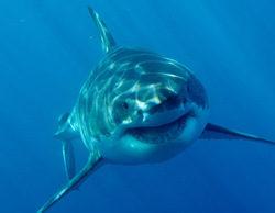 """Discovery Channel programa por segundo año """"Sharktember"""", más de 250 horas de programación dedicadas a los tiburones"""