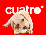 Cuatro abre un casting para buscar perros y dueños con una relación especial
