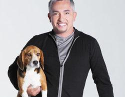 César Millán ('El encantador de perros'), investigado por posible crueldad animal en su programa