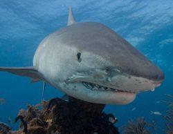 Discovery Channel presenta Sharktember: todo el mes de septiembre enseñando los dientes con los tiburones