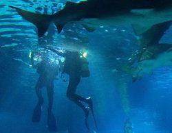 Alejandra Castelló vence a su miedo y nada entre tiburones en 'Hora punta'
