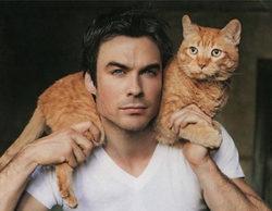 7 famosos televisivos que se declaran amantes de los gatos