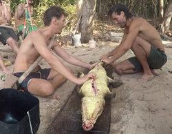 """EQUO y PACMA acusan a laSexta de mostrar una """"brutal caza de los hombres a un caimán"""" en 'La isla'"""