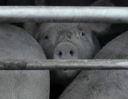 'Salvados' muestra la cara que nadie quiere ver de nuestra alimentación