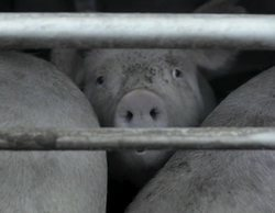 Dia denuncia públicamente haber sido chantajeados por la ONG que se coló en la granja de El Pozo en 'Salvados'