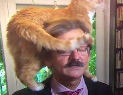Un gato se convierte en el protagonista inesperado en una entrevista en directo en la televisión holandesa