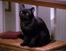 'Las escalofriantes aventuras de Sabrina': El gato Salem estuvo a punto de ser sustituido por un perro