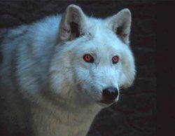 'Juego de Tronos' descartó la épica secuencia que habría hecho justicia a Fantasma