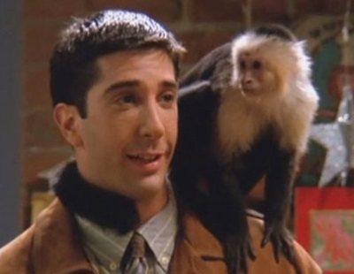 Katie, el mono Marcel de 'Friends', vuelve a la televisión con este proyecto