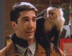 Katie, el mono Marcel de 'Friends', vuelve a la televisión para protagonizar 'Y: The Last Man'
