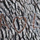 El corazón de Alba y Leo dibujado en el árbol