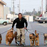 César Millán patina con sus perros