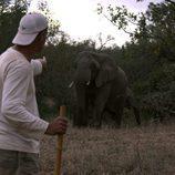 Frank Cuesta al lado de un elefante en 'Wild Frank'