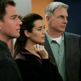 Michael Weatherly, Sasha Alexander y Mark Harmon en 'Tribus'