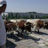 Frank Cuesta junto a unos toros en 'Wild Frank: Toros'