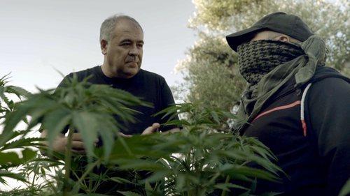 Antonio García Ferreras entre plantas de marihuana en 'Estrecho'
