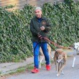 Jorge Javier Vázquez dando un paseo con sus perros durante sus días de reposo