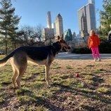 Mercedes Milá juega con un perro en Nueva York en la temporada 2 de 'Scott y Milá'