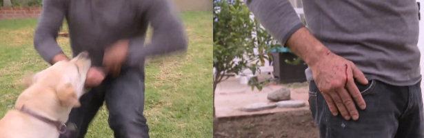 Holly mordió a César Millán durante la grabación de 'El encantador de perros'