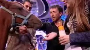 Hannah Montana le da el biberón a un poni en 'El hormiguero'
