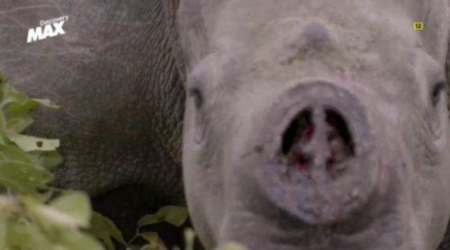 La caza furtiva del rinoceronte, nuevo documental de 'Clandestino con David Beriain'
