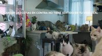 El PP cambia a los hipsters por los gatos en su nuevo vídeo de campaña