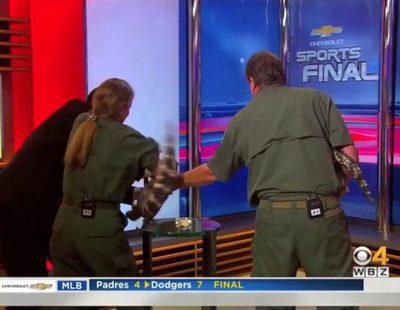 El susto de un presentador por la reacción de un caimán en plató