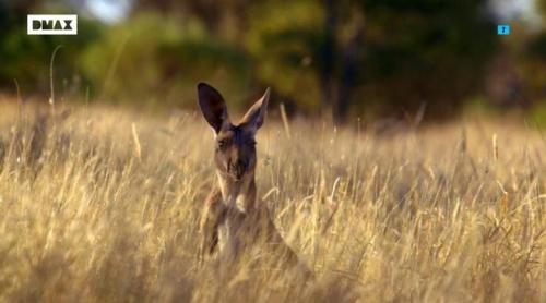 Frank Cuesta viaja hasta Australia en el primer avance de la séptima temporada de 'Wild Frank'