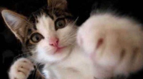 Un gato interrumpe un programa de información en vivo en la televisión turca
