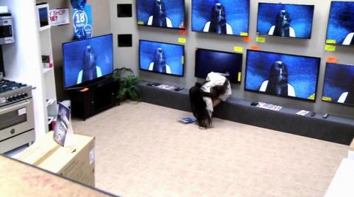 """La niña de """"Rings"""" y su hilarante cámara oculta al salir de la pantalla de una tienda de televisores"""