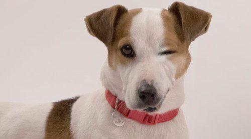 """Adiestrador de Ramsé, perro de 'Sabuesos': """"En la secuencia está jugando. Nos hemos armado de paciencia"""""""