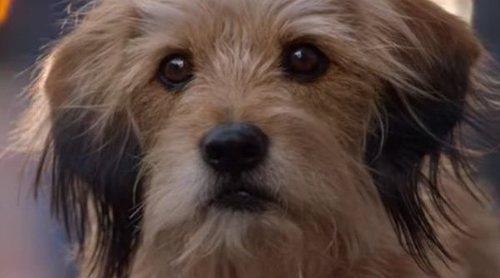 """Tráiler de """"Benji"""", la nueva película de Netflix"""