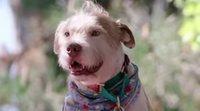 Tráiler de 'Dogs', la serie documental de Netflix con las historias más perrunas