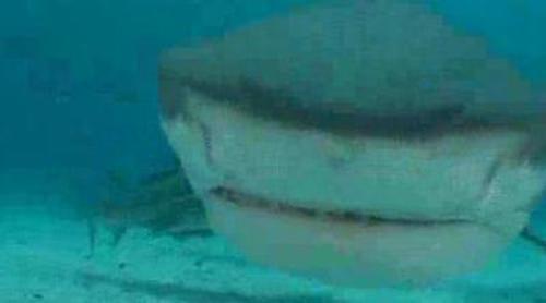 Tiburones salvajes o peligrosas escaladas, entre los nuevos retos de Jesús Calleja en 'Desafío Extremo'