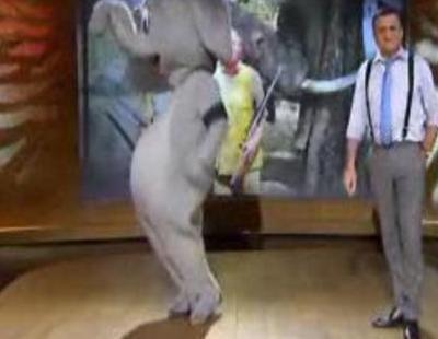 """Un elefante huye de la palabra """"Borbón"""" en 'El intermedio' con Wyoming"""