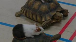 Trailer de 'Animal Practice' de NBC, con Justin Kirk
